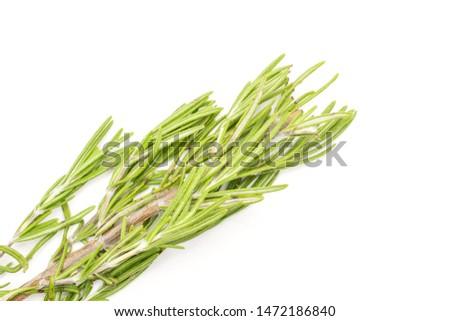 One whole leathery fresh evergreen sprig of rosemary flatlay isolated on white background