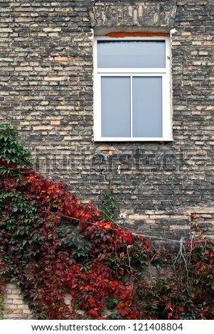 One window in vintage style with red plants around