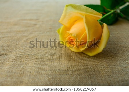 One yellow rose on the table, copy space