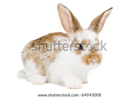 White rabbit nutcracker copyright brn
