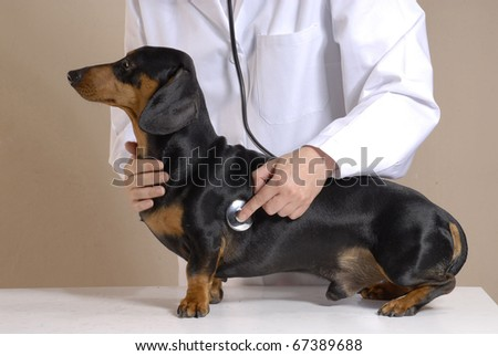One young veterinarian woman holding a black dog.