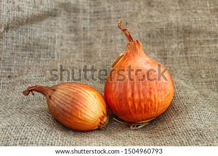 Onion, bulb onion or common onion. Onion on fabric background #1504960793