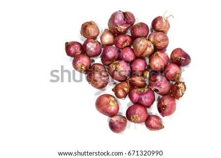 onion with white background.copy space..copy space..copy space..copy space.