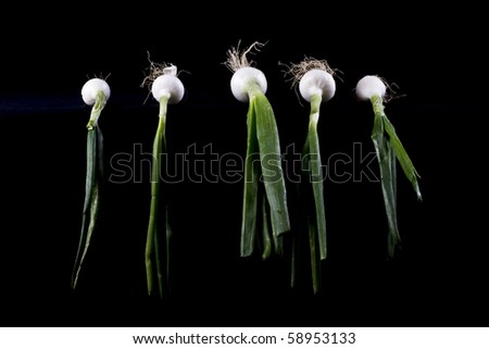 onions on black background
