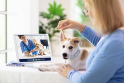 Online consultation with veterinarian. Vet examining animal via video chat. Dog check up during quarantine. Veterinary doctor checking pet in conference call. Remote medicine and emergency assistance.