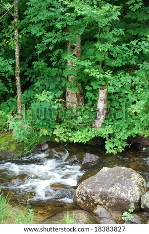 Ontario, Canada - July 28, 2008: Photo of small cold brook in the forest. Ontario, Canada