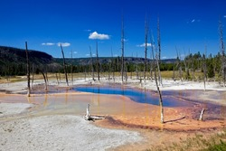 Opalescent pool in Yellowstone National park