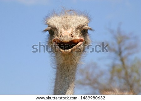 open beak ostrich head with blue sky