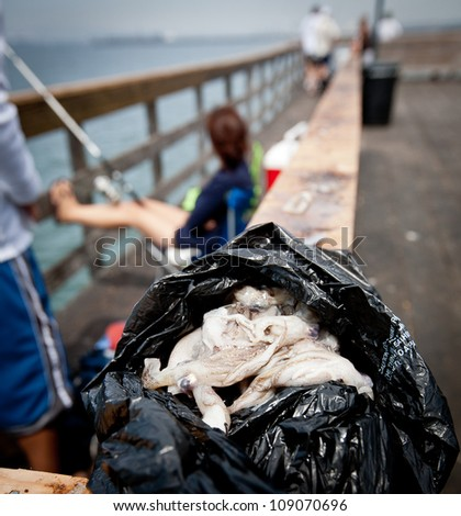 Open black trash bag filled with small squid to be used as bait on a wood ledge on the Long Beach Pier with people fishing in the background over a wood railing