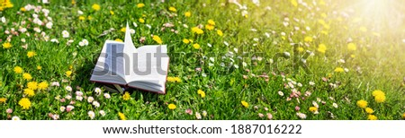 Open book in the grass on the field on sunny day in spring. Beautiful meadow with daisy and dandelion flowers at springtime. Reading and knowledge concept