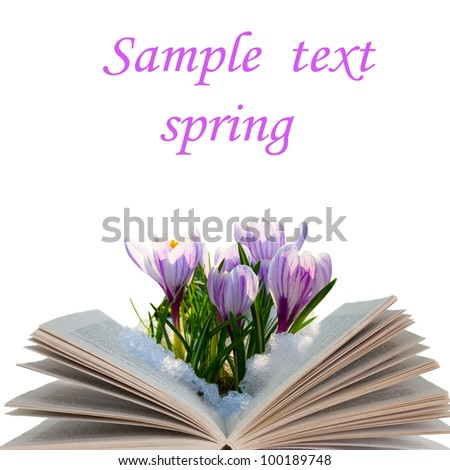 Open book with crocuses isolated on white background