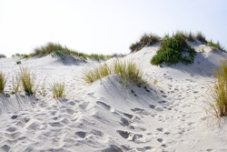 Open dunes vegetation and footprints in white sand beach near ilhavo, Portugal, during a summer day.