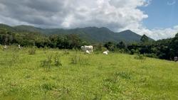 Open field rural road grass animals farm site