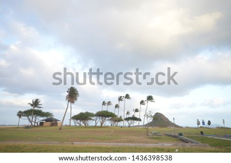 Open field with trees on a windy day