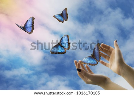 open hands let go of beautiful blue butterflies in the mystical sky #1016170105