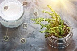 Open Jar of Face cream and green succulent on gray background. Natural organic cosmetic facial with herbal ingredients. Beauty skincare product concept. Vitamins and ingredients of natural cosmetics