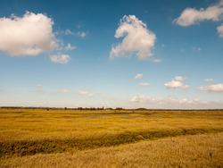 open marshland landscape scene with blue skies, clouds, and grass; essex; england; UK