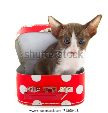Open red dotted suitcase with cute little cat