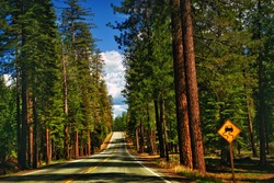 Open Road through Redwood Trees Straight and Empty in Summertime