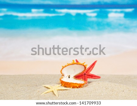 Open sink and starfishes on the sea coast