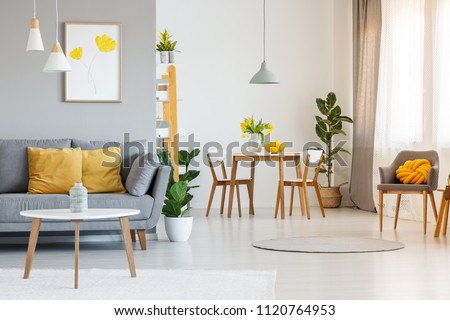 Open space living and dining room interior with gray sofa, wooden tables, white chairs and plants. Real photo #1120764953