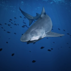 open water deep blue ocean and big angry hungry shark