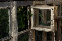 Open window of the old greenhouse. An old window leads to a greenhouse with tomatoes. Greenhouse with tomatoes. The mysterious window.