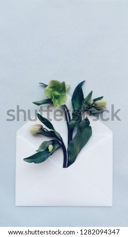 Opened envelope with hellebore flowers arrangements on blue background, top view. Festive greeting concept #1282094347