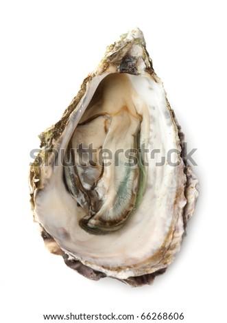 Opened fresh oyster on white background