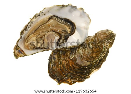 Opened Fresh Oyster Shell Showing The Meat