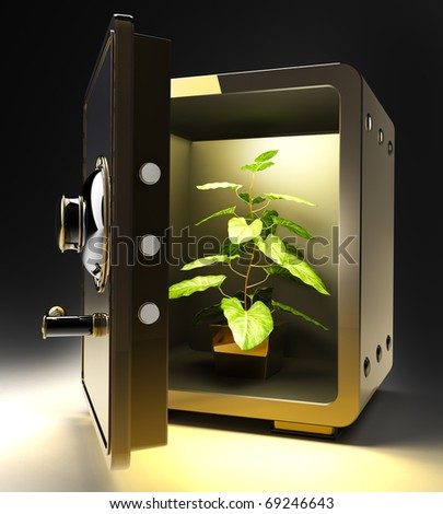 Opened golden safe with Flower in a pot isolated on black 3D render
