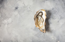 Opened Oyster on gray concrete texture background