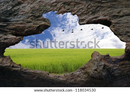 Opening hole on wooden wall leads to outside field and blue sky