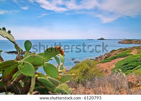 Opuntia cactus and a coast of Sardinia with a island and lighthouse