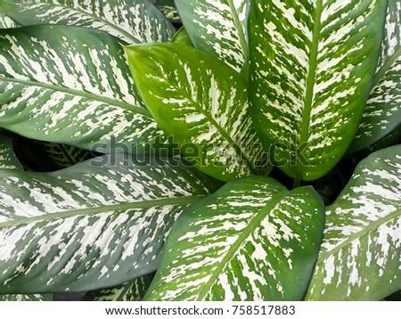 Oranamental plant in the garden - Shutterstock ID 758517883
