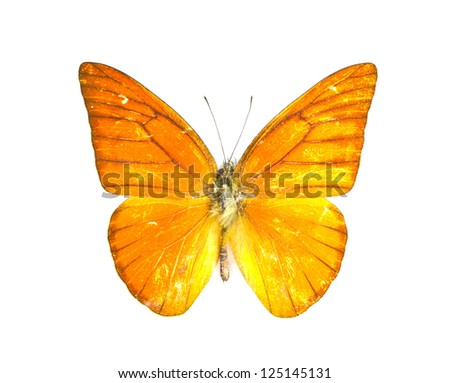 Orange Albatross butterfly (Appias nero) on white background.