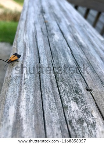 Orange and black bug on deck rail #1168858357
