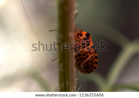 Orange and Black bug walking on plant #1136255606