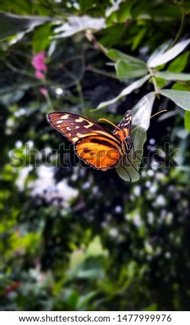 orange and black butterfly in natural setting #1477999976