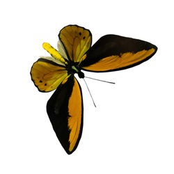 Orange and black butterfly isolated on white background with outstretched wings. A type of flying insects that personify summer and the beauty of nature.