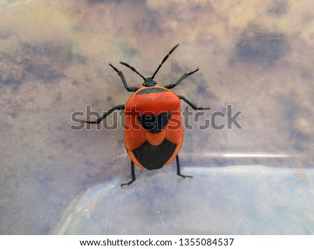 Orange and black colored bug inside a plastic bottle.                       #1355084537