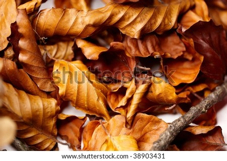 orange and brown leaves on white seamless