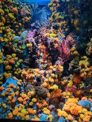 Orange and different coloured corals underwater. Beautiful and lively sealife.