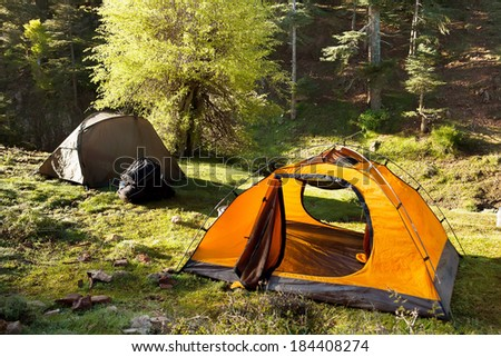 orange and green tents are in the green sunny forest #184408274