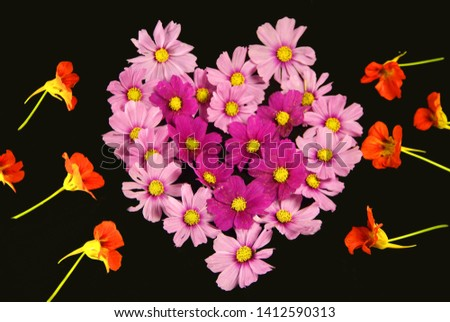 Orange and pink flower background vividly bright, bloom from floral plant on flowerbed in the garden