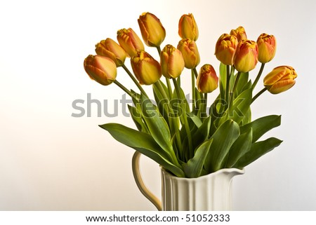 Orange and red tulips in cream jug on a plain background
