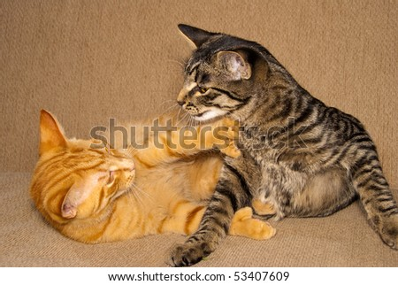 Orange and tabby cats fighting and playing.