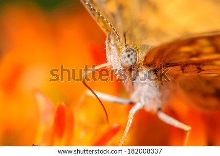 Orange and White Butterfly on an Orange Flower