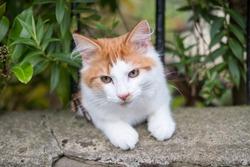 Orange and White Cat in the Grass