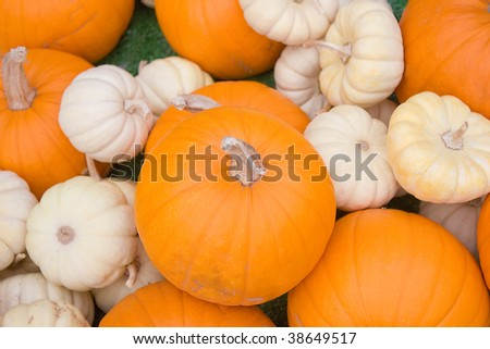 Orange and White Pumpkins Fall or Autumn Background